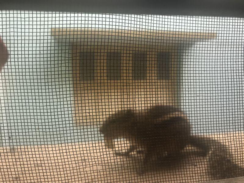 Hörnchen draussen