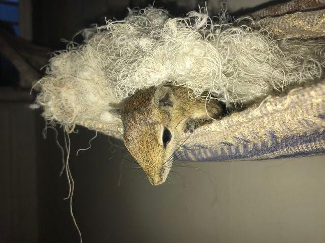 Hörnchen im Nest 2