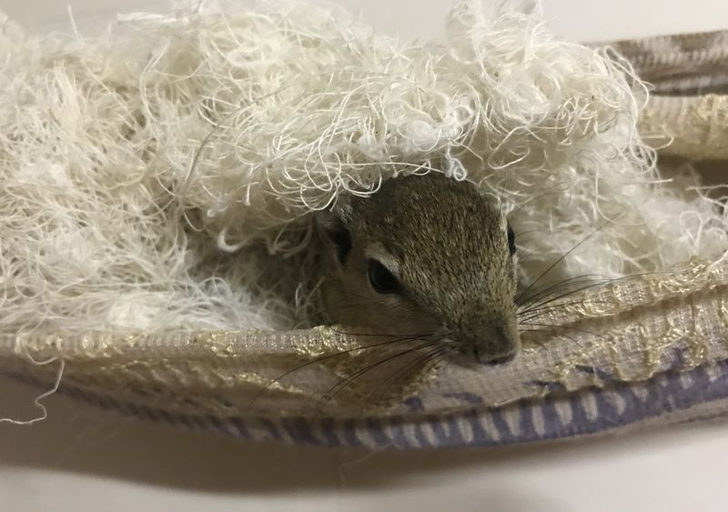Hörnchen im Nest
