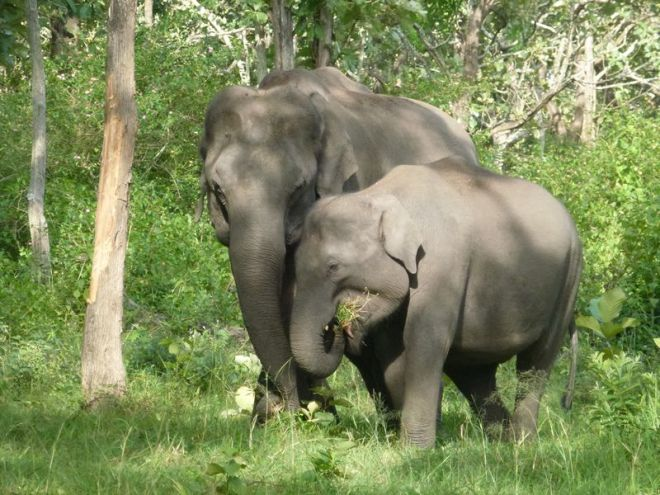 Elefanten 4