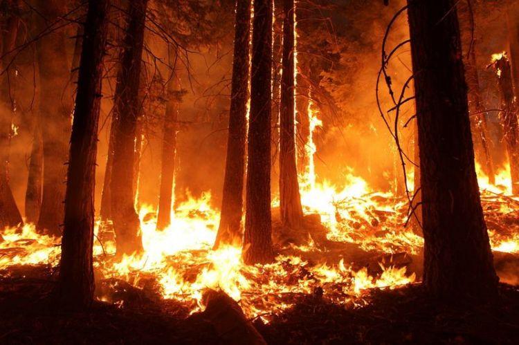 Feuersbrunst Bandipur