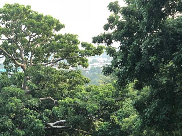 St. Thomas Mount 2