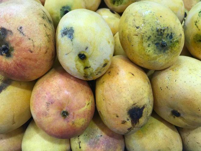 Jawwathu Mango