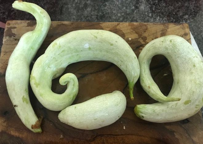Snake gourd 1