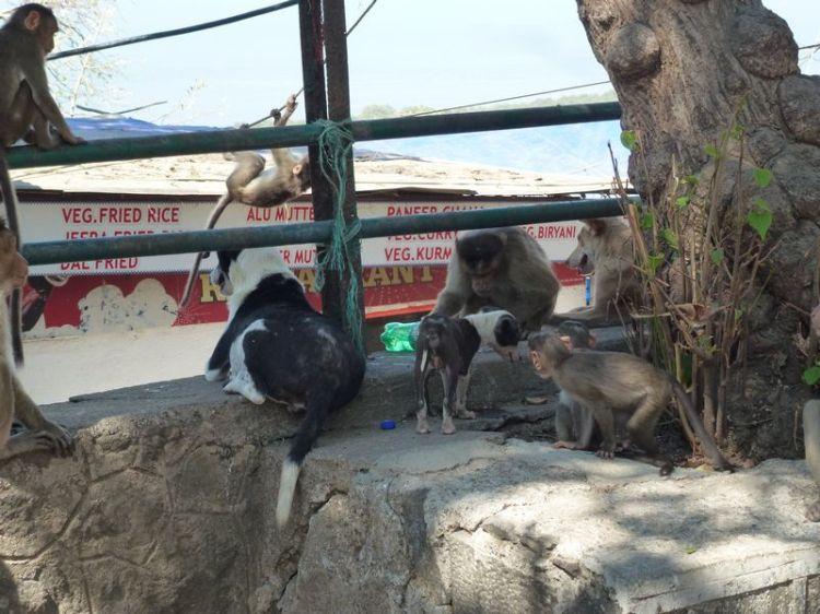 Affen und Hunde