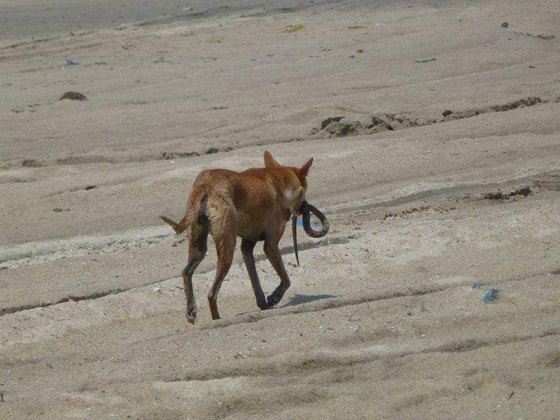 Strassenhund mit Schlange